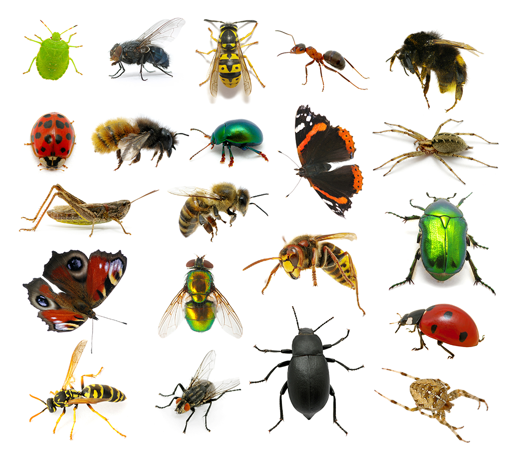 Flying Amp Crawling Insects Pest Control County Meath